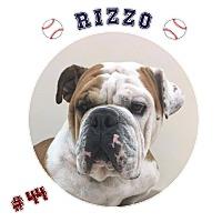 Adopt A Pet :: Rizzo - Park Ridge, IL