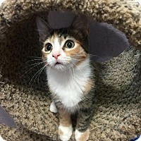 Adopt A Pet :: Anniston - McDonough, GA