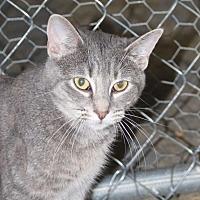Adopt A Pet :: Bonnie - Columbia, TN