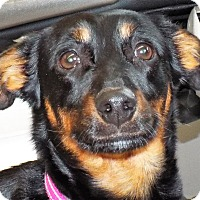 Adopt A Pet :: Lilly - Grants Pass, OR