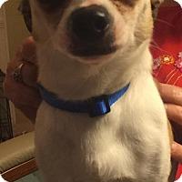 Adopt A Pet :: PEEKNOT - BROOKSVILLE, FL