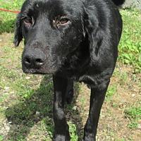 Adopt A Pet :: Slushy - Reeds Spring, MO
