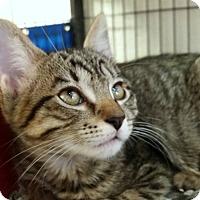 Adopt A Pet :: Candice - Sarasota, FL
