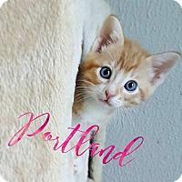Adopt A Pet :: Portland - Wichita Falls, TX