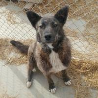 Adopt A Pet :: Smoky - Meadow Lake, SK