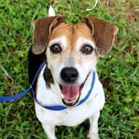 Mixed Breed (Medium) Mix Dog for adoption in Bradenton, Florida - Patsy