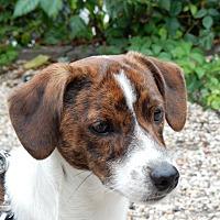 Adopt A Pet :: Whitman - Long Beach, NY