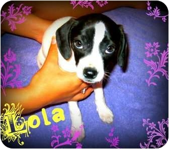 Terrier (Unknown Type, Medium) Mix Puppy for adoption in Spanish Fort, Alabama - Lola