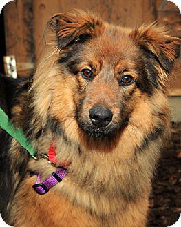 Shepherd (Unknown Type) Mix Dog for adoption in Bellingham, Washington - Jersey