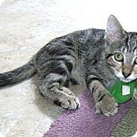 Adopt A Pet :: Tia - Delray Beach, FL