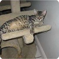 Adopt A Pet :: Mutt - Ft. Lauderdale, FL