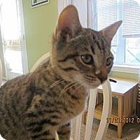Adopt A Pet :: Booger - Bunnell, FL