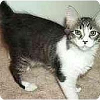 Adopt A Pet :: Aurora - Greenville, SC