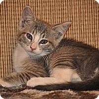 Adopt A Pet :: Belle - Modesto, CA
