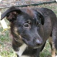 Adopt A Pet :: Rolo - Austin, TX