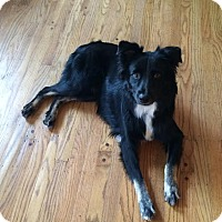 Adopt A Pet :: Stanley - Washington, IL