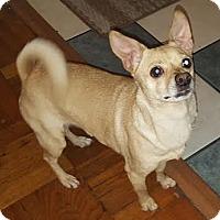 Adopt A Pet :: Daisy - Gainesville, FL