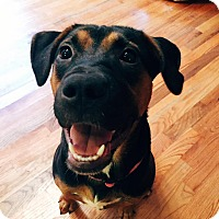 Adopt A Pet :: Connor - Tallahassee, FL
