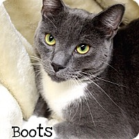Adopt A Pet :: Boots - Foothill Ranch, CA