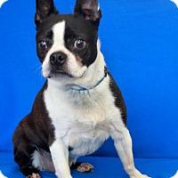 Adopt A Pet :: Lucky - Wichita, KS