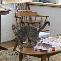 Adopt A Pet :: Bony - Portland, IN