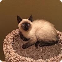 Adopt A Pet :: Tao - San Jose, CA