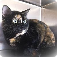 Adopt A Pet :: Little One - Webster, MA