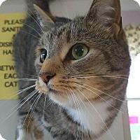 Adopt A Pet :: Belladonna - a princess! - Salisbury, MA
