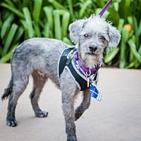 Adopt A Pet :: Kasey D4174 - Fremont, CA
