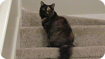 Domestic Mediumhair Cat for adoption in Winder, Georgia - *Delilah