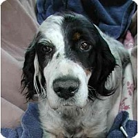 Adopt A Pet :: Ophelia- ADOPTION PEND! - Columbus, OH