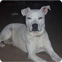 Adopt A Pet :: Destiny - Arlington, TX