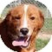 Adopt A Pet :: Justin - Denver, CO