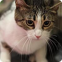 Adopt A Pet :: Anastacia - Sacramento, CA