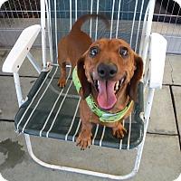 Adopt A Pet :: SONNY - Atascadero, CA