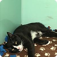 Adopt A Pet :: Bobby - Rockaway, NJ