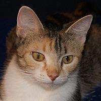 Adopt A Pet :: Heather - Dundee, MI