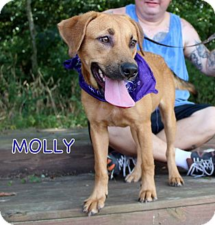 Black Mouth Cur/Shepherd (Unknown Type) Mix Dog for adoption in South Dennis, Massachusetts - Molly