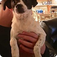 Adopt A Pet :: Minnie Riperton - Alpharetta, GA