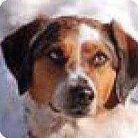 Adopt A Pet :: Melody - Portola, CA