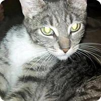 Adopt A Pet :: Honey - Chandler, AZ
