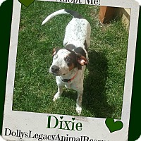 Adopt A Pet :: DIXIE - Lincoln, NE