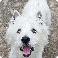 Adopt A Pet :: INDY - Frisco, TX