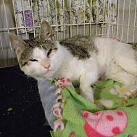 Adopt A Pet :: Maggie - Bartlett, IL