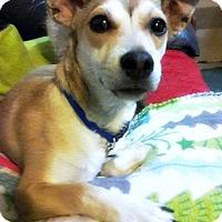 Adopt A Pet :: Terrence - Tijeras, NM