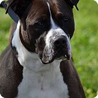 Adopt A Pet :: ROSCOE ADOPTION PENDING !! - Sterling, MA