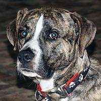 Adopt A Pet :: Rascal - Marion, NC