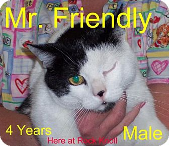 Domestic Shorthair Cat for adoption in Guthrie, Oklahoma - Friendly