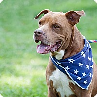 Adopt A Pet :: Red - Unionville, PA