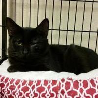 Adopt A Pet :: Olive - Waupun, WI